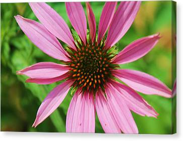 Canvas Print featuring the photograph Open Bloom by Alicia Knust