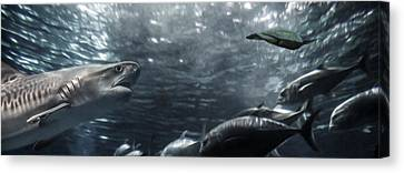 Open Water Canvas Print by Brad Scott