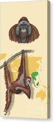 Orang-utan Orangutan Pongo Pygmaeus - Shrinking Habitat - Zoo Panel Great Apes - Schautafel  Canvas Print by Urft Valley Art