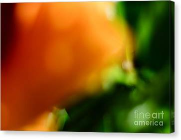 Orange And Green  Canvas Print by Bobby Mandal