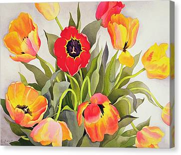 Orange And Red Tulips  Canvas Print by Christopher Ryland