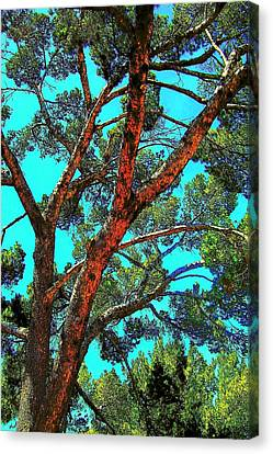 Orange And Turquoise  Canvas Print by Jodie Marie Anne Richardson Traugott          aka jm-ART