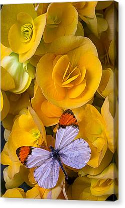 Orange And White Butterfly Canvas Print by Garry Gay