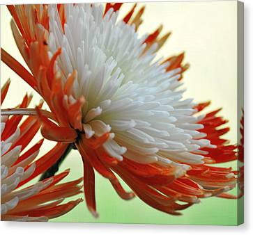 Orange And White Flower Canvas Print