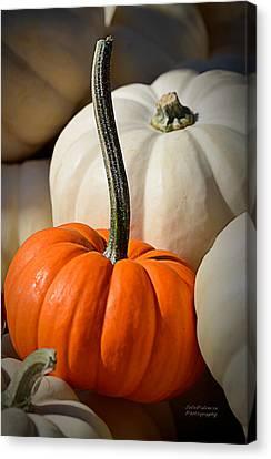Orange And White Pumpkins Canvas Print