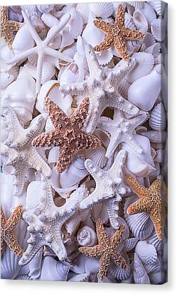Orange And White Starfish Canvas Print by Garry Gay
