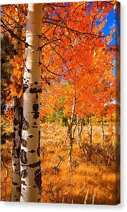 Canvas Print featuring the photograph Orange Aspens by Aaron Whittemore
