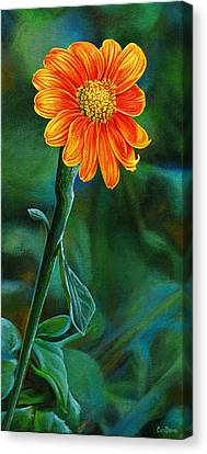 Orange Aster Canvas Print by Cara Bevan