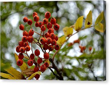 Canvas Print featuring the photograph Orange Autumn Berries by Scott Lyons