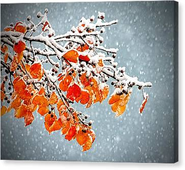 Canvas Print featuring the photograph Orange Autumn Leaves In Snow by Tracie Kaska