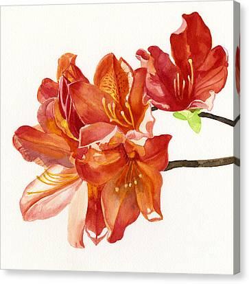 Orange Azalea Square Design Canvas Print by Sharon Freeman
