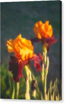Orange Bearded Irises Canvas Print by Omaste Witkowski