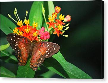 Canvas Print featuring the photograph Orange Beauty by Amee Cave