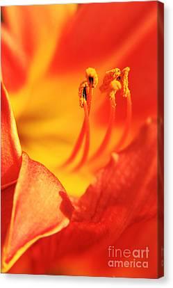 Orange Blooming Canvas Print