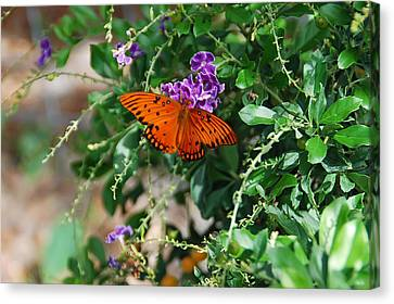 Orange Butterfly Canvas Print by Aimee L Maher Photography and Art Visit ALMGallerydotcom