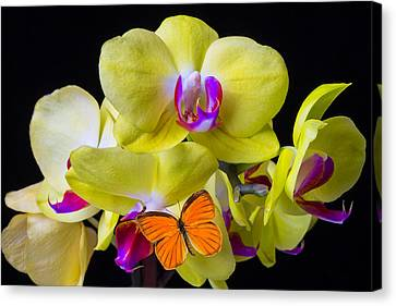 Orange Butterfly And Yellow Orchids Canvas Print by Garry Gay