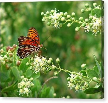 Canvas Print featuring the photograph Orange Butterfly by Marcia Socolik