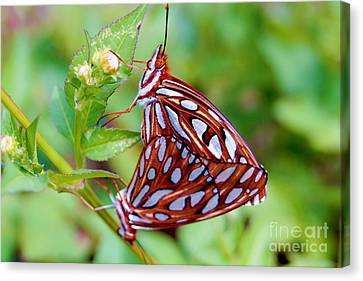 Orange Butterfly Canvas Print by Michael Frizzell