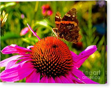 Canvas Print featuring the photograph Orange Butterfly  by Sarah Mullin