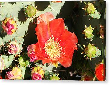 Canvas Print featuring the photograph Orange Cactus Bloom by Dick Botkin