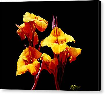 Orange Cannas Canvas Print by Gary  Hernandez