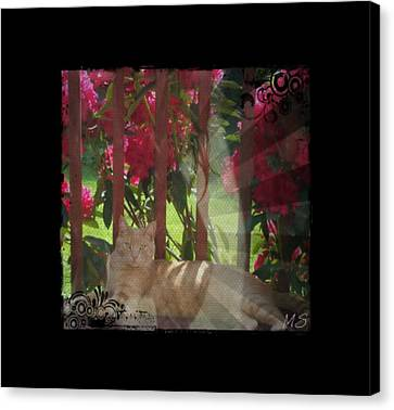 Canvas Print featuring the photograph Orange Cat In The Shade by Absinthe Art By Michelle LeAnn Scott