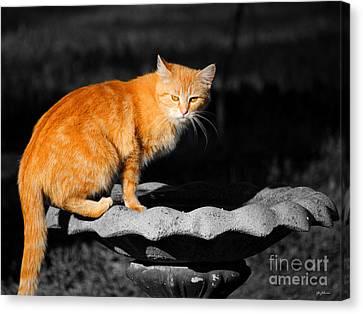 Orange Cat Canvas Print by Jai Johnson