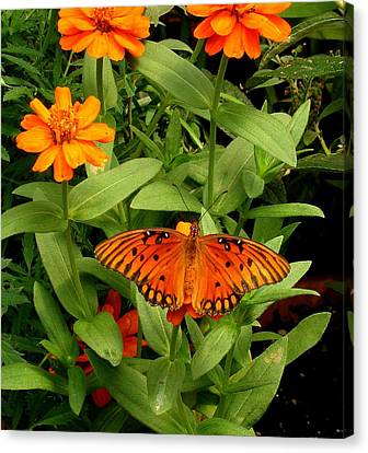 Orange Creatures Canvas Print by Rodney Lee Williams