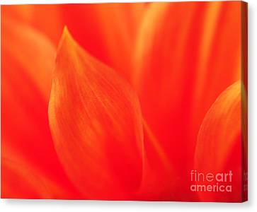Canvas Print featuring the photograph Orange Dahlia Abstract by Olivia Hardwicke