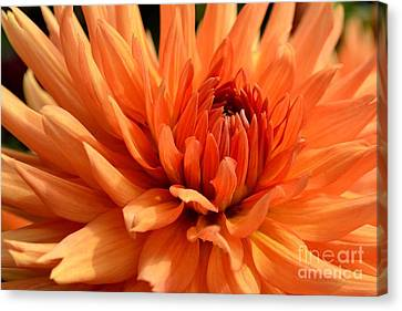 Orange Dahlia Canvas Print