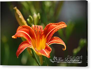 Orange Day Lily 20120614_5a Canvas Print