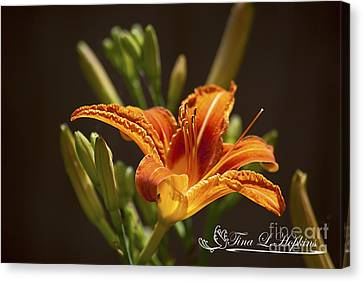 Orange Day Lily 20120615_21a Canvas Print