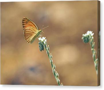 Canvas Print featuring the photograph Orange Day by Meir Ezrachi
