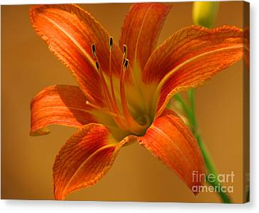 Canvas Print featuring the photograph Orange Daylily by Olivia Hardwicke