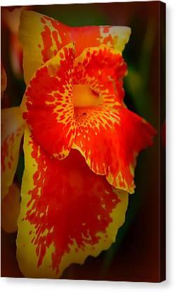 Orange Delight Canvas Print by Debra Forand