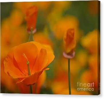 Orange Delight Canvas Print by Nick  Boren