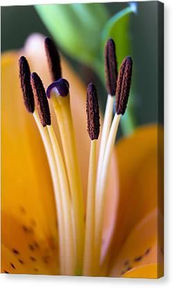 Orange Dream Lily Canvas Print