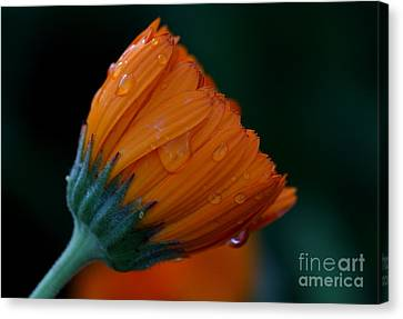 Orange Dream Canvas Print by Ruth Jolly