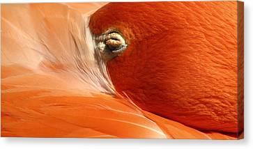 New York New York Com Canvas Print - Flamingo Orange Eye by Bob Slitzan