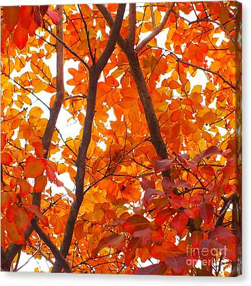 Orange Fall Color Canvas Print by Scott Cameron