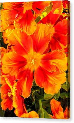 Orange Flames Canvas Print by Pat Cook