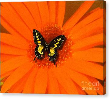 Canvas Print featuring the photograph Orange Flower And A Butterfly By Saribelle Rodriguez by Saribelle Rodriguez