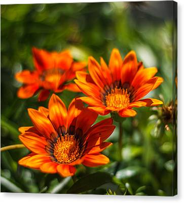 Canvas Print featuring the photograph Orange Flowers by Jane Luxton