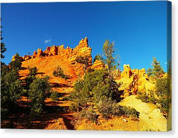 Orange Foreground A Blue Blue Sky  Canvas Print by Jeff Swan