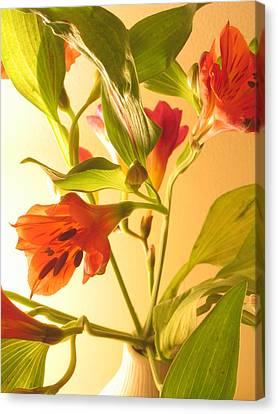 Orange Fresias Canvas Print