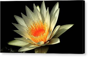 Blending Canvas Print - Orange Glow   # by Rob Luzier