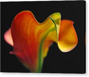 Calla Lily Canvas Print - Orange Goddess by Juergen Roth