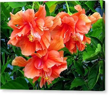 Orange Hibiscus 3 Canvas Print