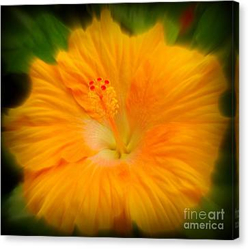 Canvas Print featuring the photograph Orange Hibiscus Flower by Clare Bevan