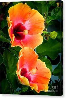 Orange Hibiscuses Canvas Print